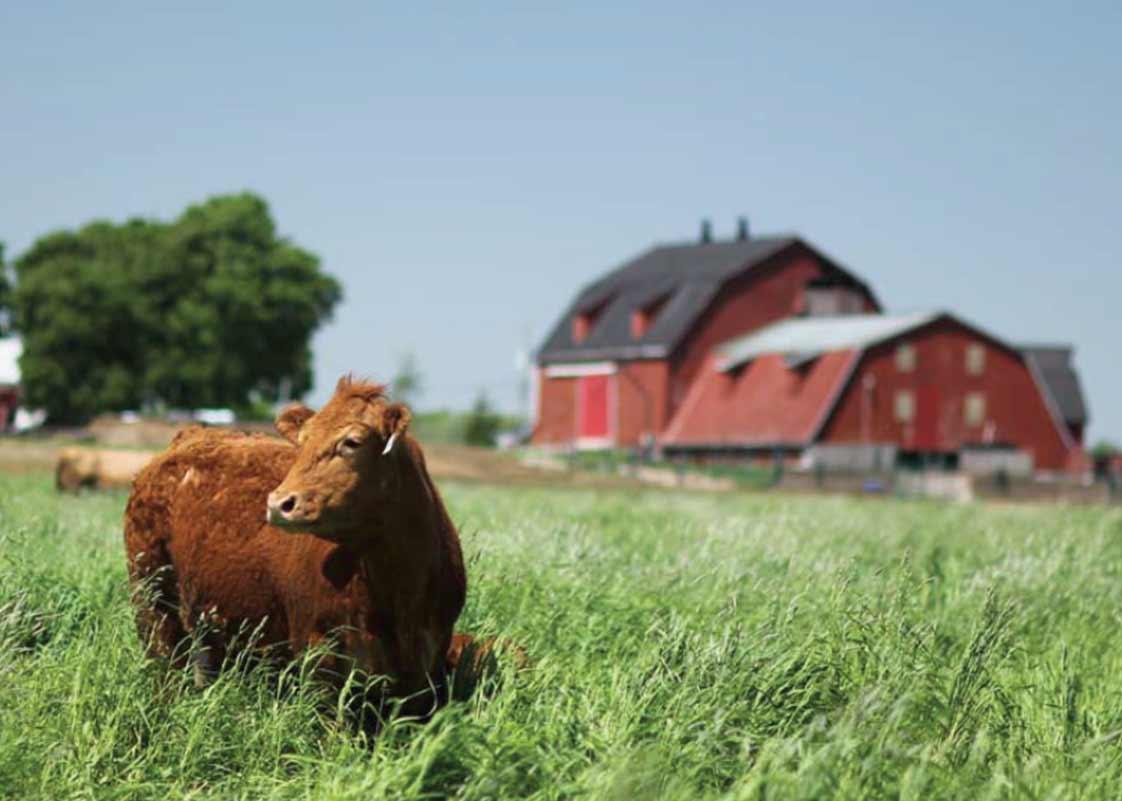 Vg meats chefs on the farm for Farm house pics